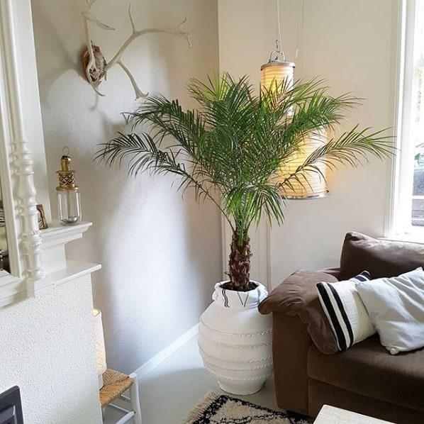 sala com vaso de palmeira ana