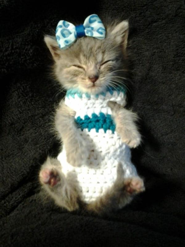 filhotinha de gato com roupa de croche