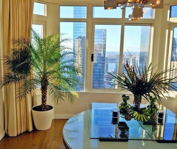 decoracao interna com vaso de palmeira phoenix