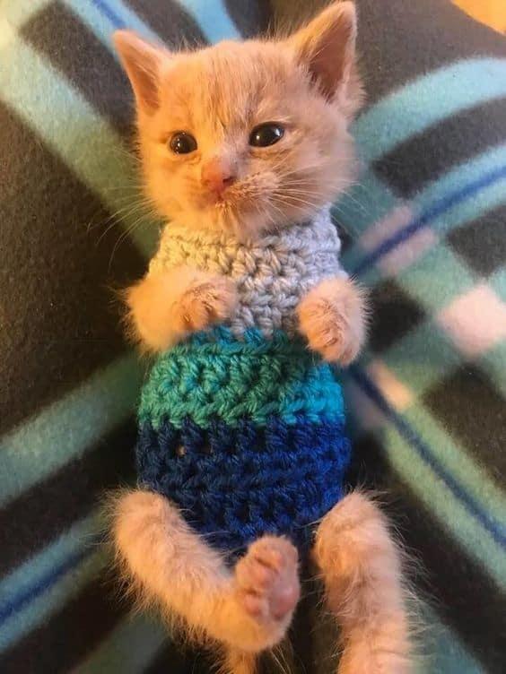 gatinho filhote com roupa quentinha
