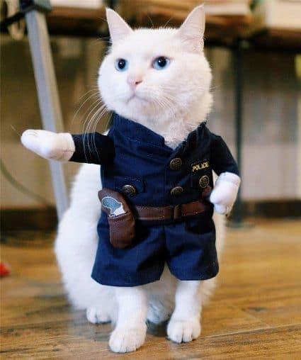 gato com roupa de fantasia de policia