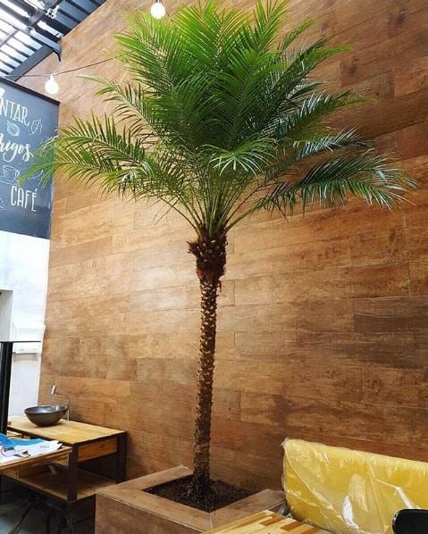 vaso de palmeira phoenix na decoracao interna
