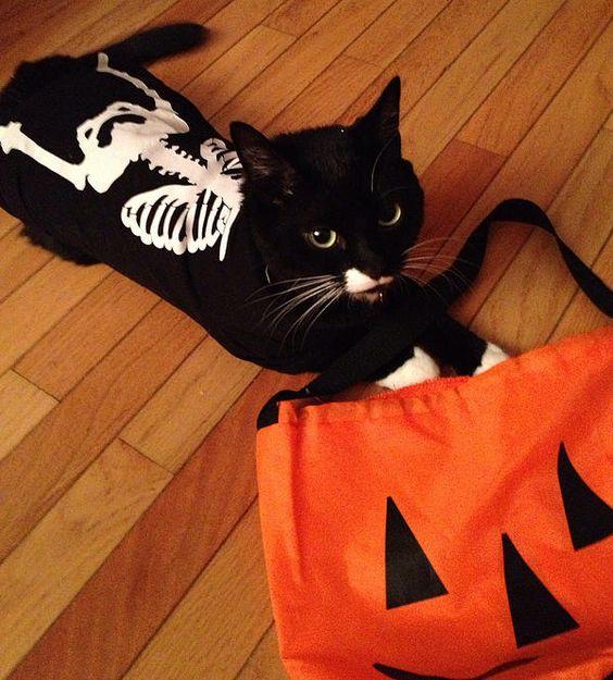 roupa de halloween para gato