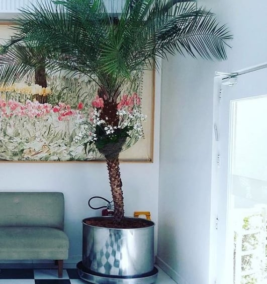 vaso com palmeira phoenix dentro de casa