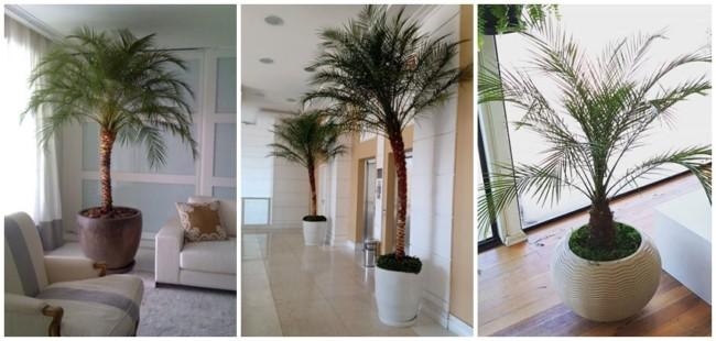 decoracao interna com palmeira fenix