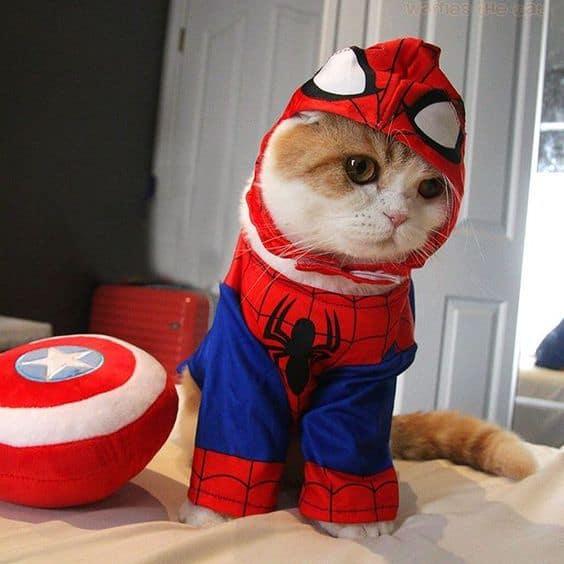 gato com fantasia de super heroi