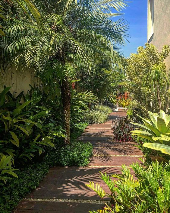 jardim pequeno e tropical com palmeira