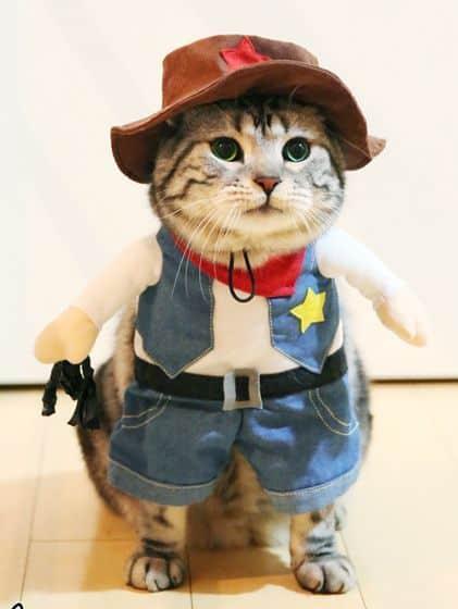 gato com roupa fantasia de xerife