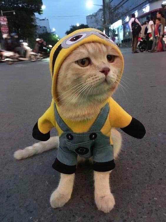 gato com fantasia de Minion