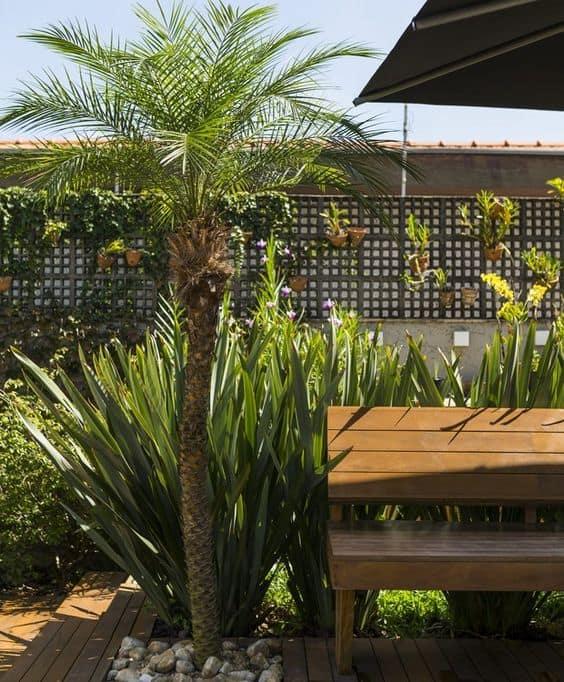 area externa com palmeira phoenix no jardim