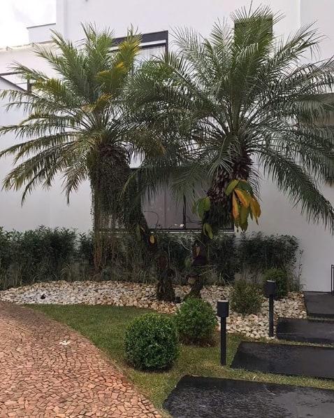 fachada de casa com palmeira phoenix