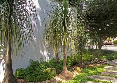 jardim decorado com biucarneas