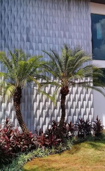 jardim de casa gramado com palmeira phoenix