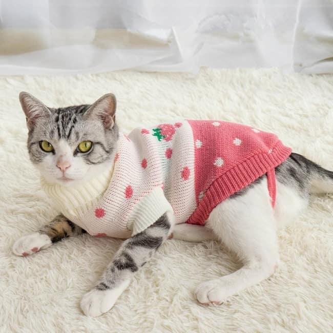 gato com roupa de frio confortavel
