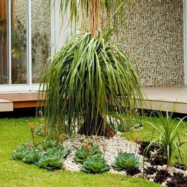 jardim externo com suculentas e pata de elefante