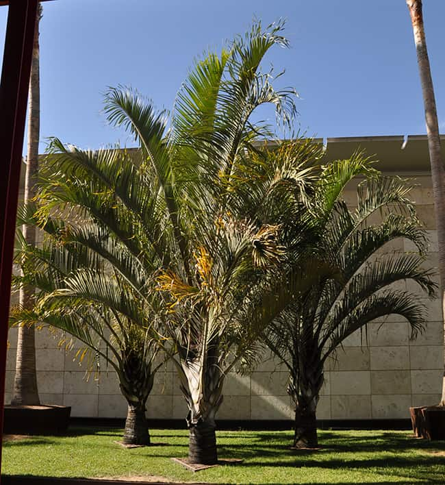Modelo de palmeira triangular