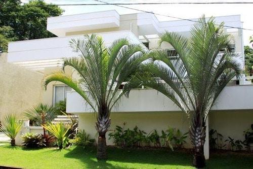 Palmeira triangular no paisagismo residencial