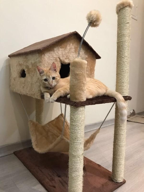 arranhador para gatos 2