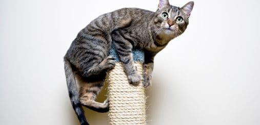 arranhador para gatos 3