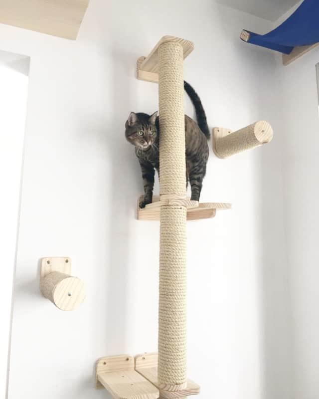 arranhador para gatos alto