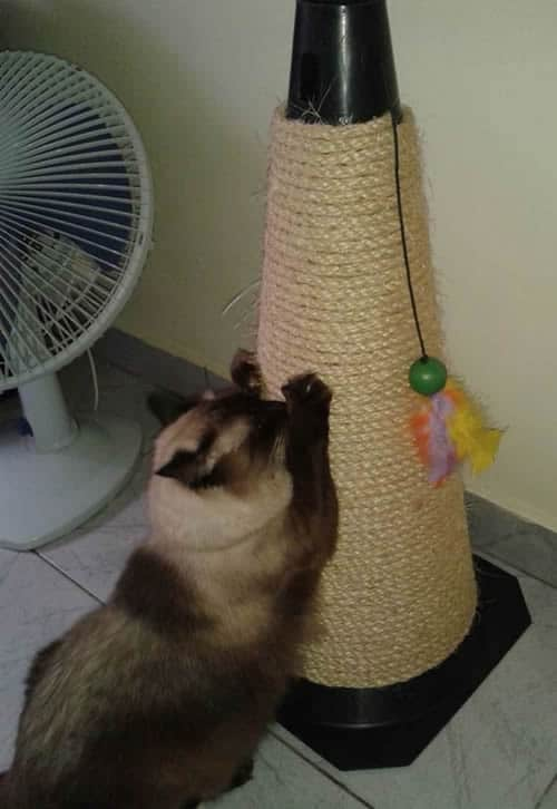 arranhador para gatos caseiro