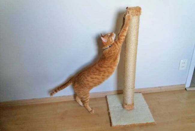 arranhador para gatos ideias