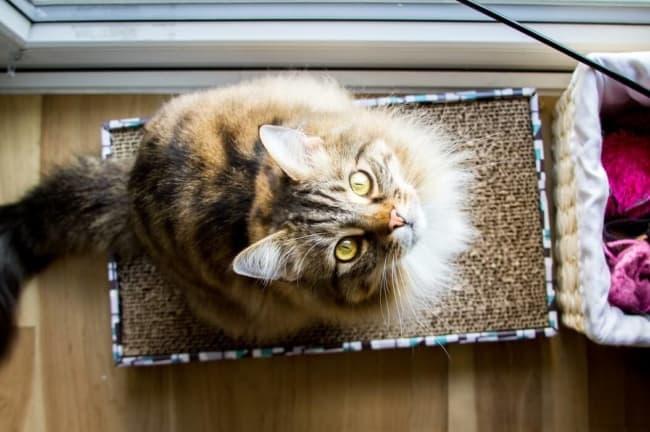 arranhador para gatos papelao