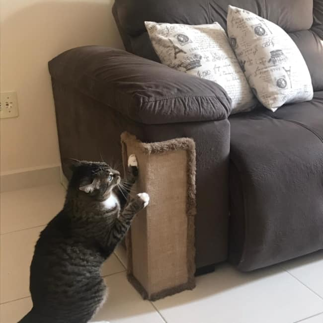 estilo de arranhador para gatos