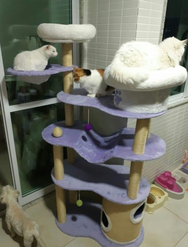 lindo arranhador para gatos 2