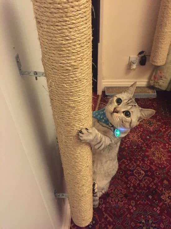 lindo arranhador para gatos