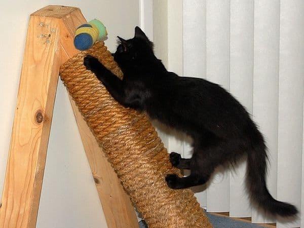modelos de arranhador para gatos