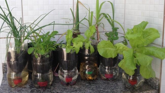 horta em vaso autoirrigavel de garrafa plastica
