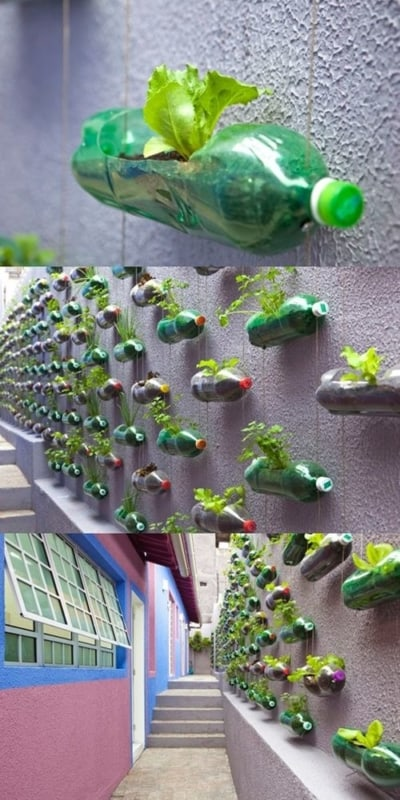 jardim vertical com horta de garrafa pet no muro