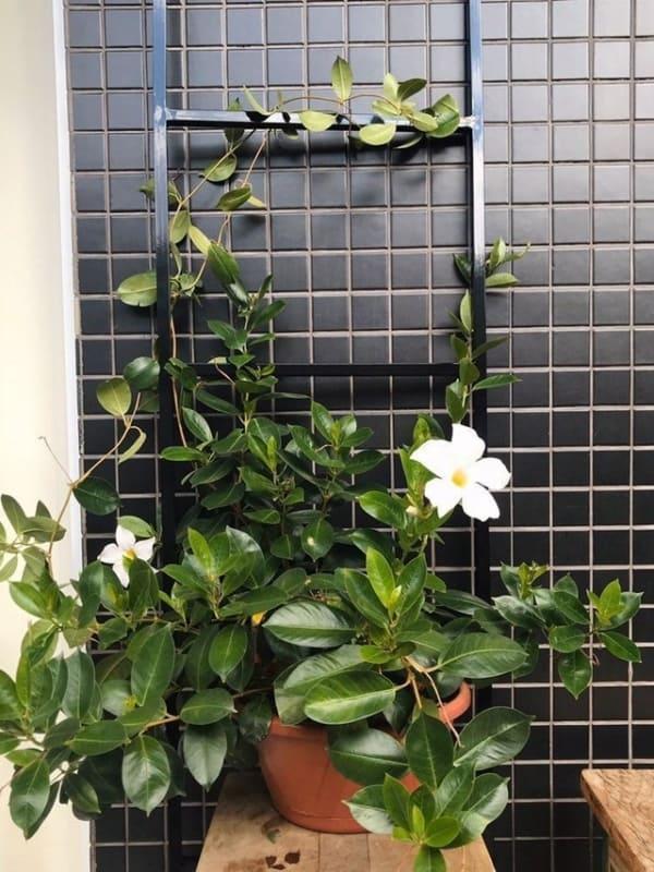escada decorativa de metal com planta trepadeira