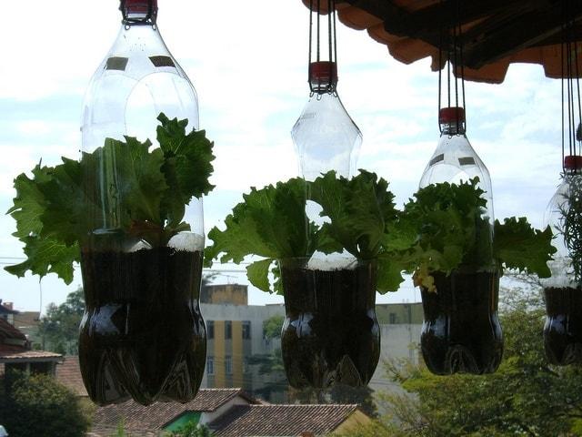 horta suspensa com garrafa pet