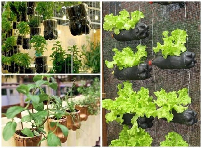 horta vertical com garrafa pet