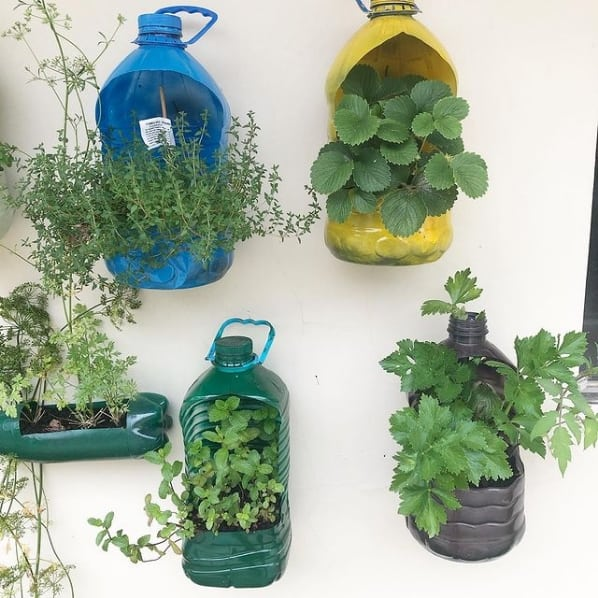 horta na parede com garrafa pet grande
