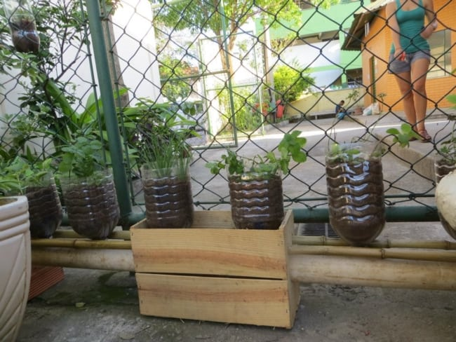 horta de temperos frescos em garrafa plastica grande