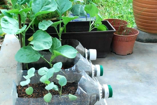 garrafa plastica grande com horta