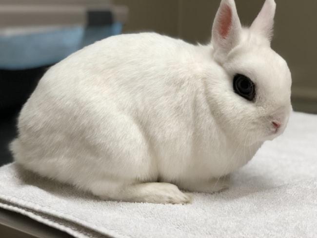 mini coelho branco de olhos marcados