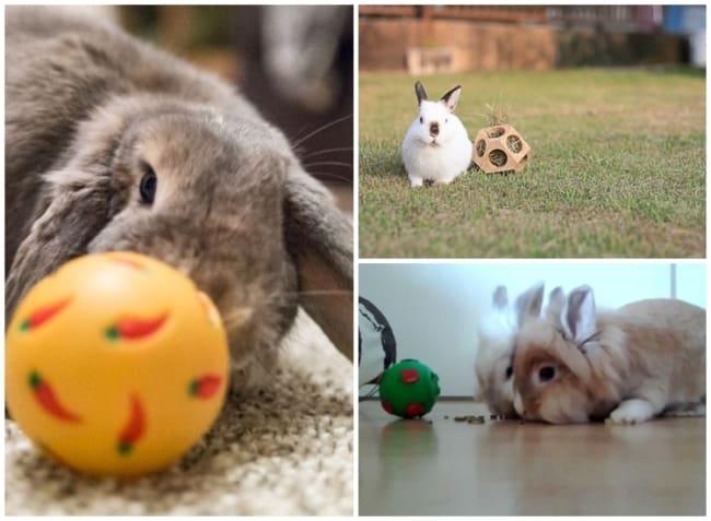 como cuidar de mini coelho