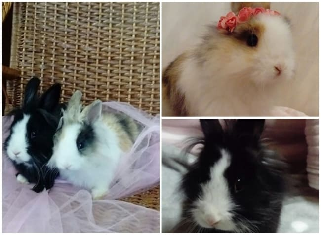 pagina de mini coelhos no Instagram