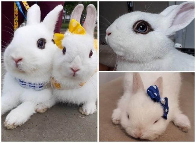 dicas de mini coelhos no Instagram