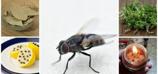 como evitar e espantar moscas
