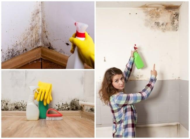 como limpar parede com umidade