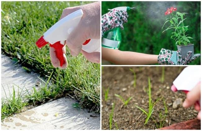 como acabar com formigas nas plantas