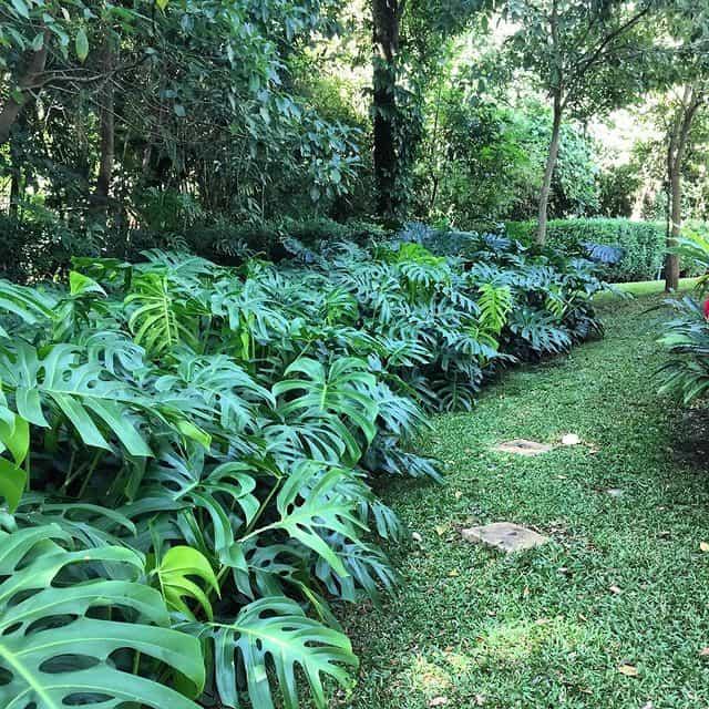 A criacao de canteiros e indicada para valorizar o paisagismo do jardim
