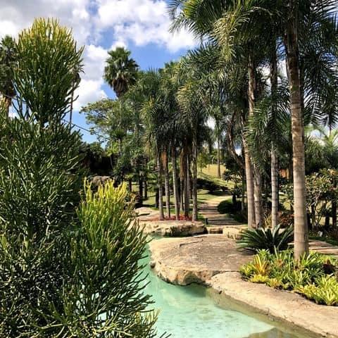 As palmeiras sao perfeitas para criar lindos projetos paisagisticos