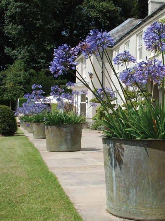 area externa decorada com vasos de agapanto