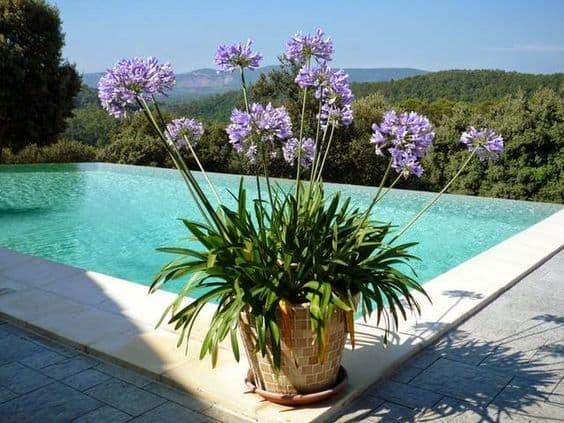 area da piscina decorada com vaso com agapanto